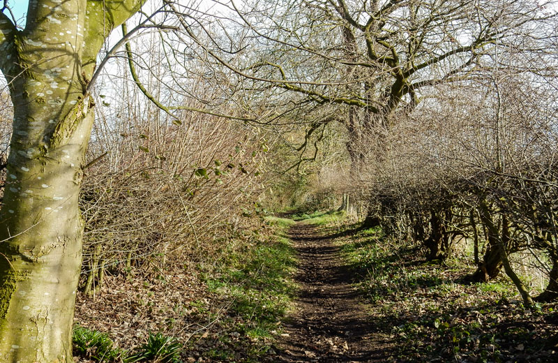 <h2>Spring comes to Bunbury</h2><div class='slide-content'><p><span class='highlight'>Muddy path off Bunbury lane</span></p></div>