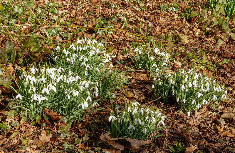 <h2>Spring comes to Bunbury</h2><div class='slide-content'><p><span class='highlight'>Snowdrops on a footpath</span></p></div>