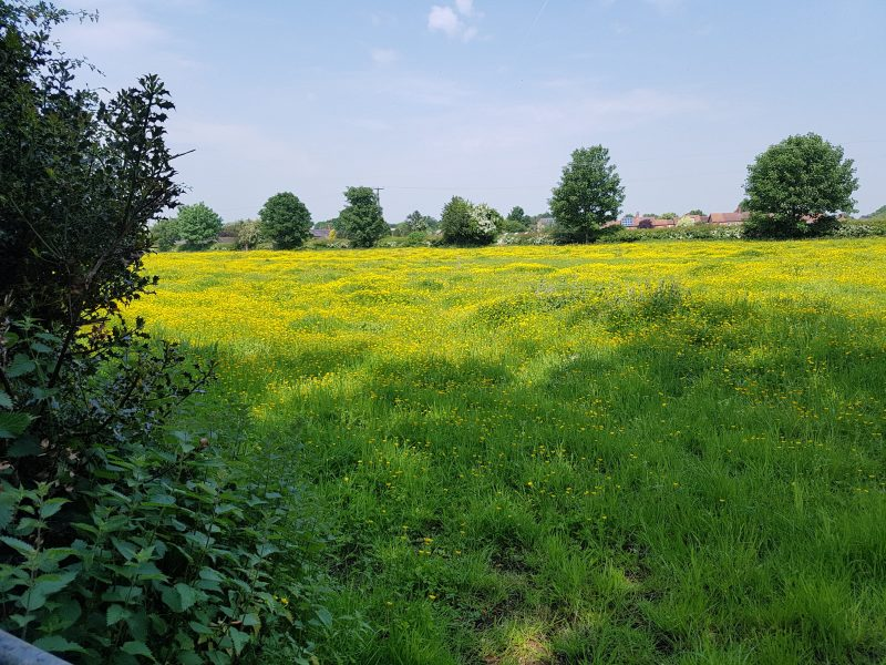 <h2>Spring into summer in Bunbury</h2><div class='slide-content'><p><span class='highlight'>View of field from footpath off Bunbury Lane</span></p></div>