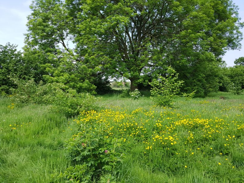 <h2>Spring into summer in  Bunbury</h2><div class='slide-content'><p><span class='highlight'>View along footpath from Bunbury Lane to Wyche Lane</span></p></div>