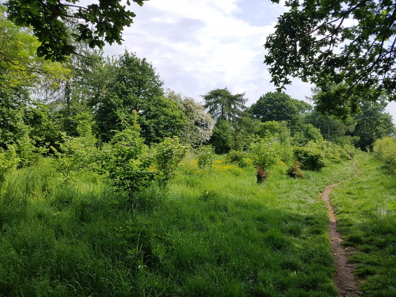 <h2>Spring into summer in Bunbury</h2><div class='slide-content'><p><span class='highlight'>Recently planted area along footpath between Bunbury lane and Wyche Lane </span></p></div>