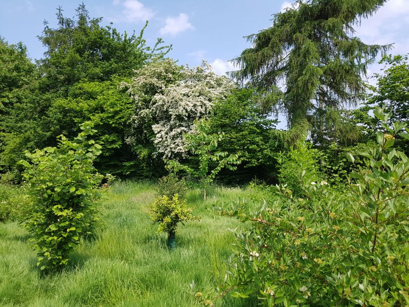 <h2>Spring into summer in Bunbury</h2><div class='slide-content'><p><span class='highlight'>Recently planted area along footpath between Bunbury lane and Wyche Lane</span></p></div>