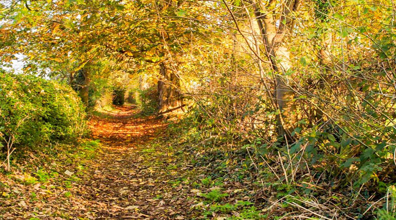 <h2>Autumn Scene 2019</h2><div class='slide-content'><p><span class='highlight'>View along a well used local footpath </span></p></div>