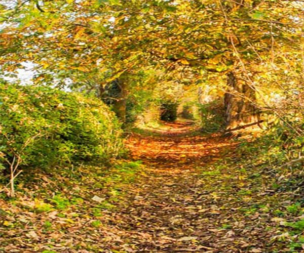 <h2>Autumn 2020</h2><div class='slide-content'><p><span class='highlight'>Footpath in autumn colours</span></p></div>